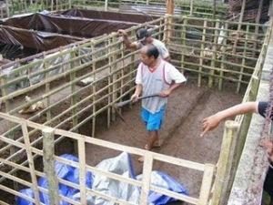 Urban Farming : Budidaya Lele di kolam Terpal