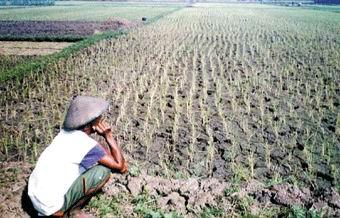 Petani Miskin Harga Hasil Bumi Naik Sarjana Pertanian Gunamu Sebuah